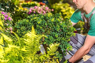 arbre arbuste haie cedre fleur plante aménagement