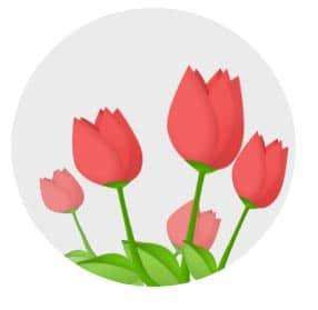 plantation de fleurs